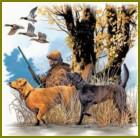 Охота на лесную куницу