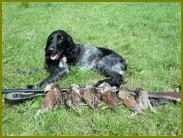 Приручение и притравливание ловчих птиц