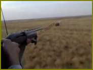 Лов зайцев